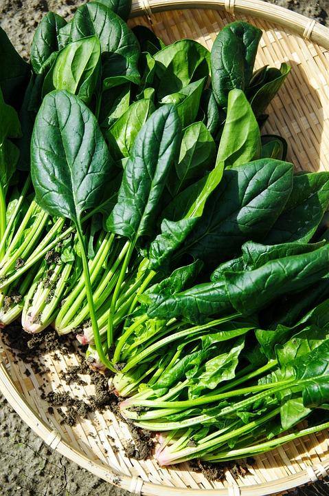 野菜, ホウレンソウ, 緑, 美味しい, 自然