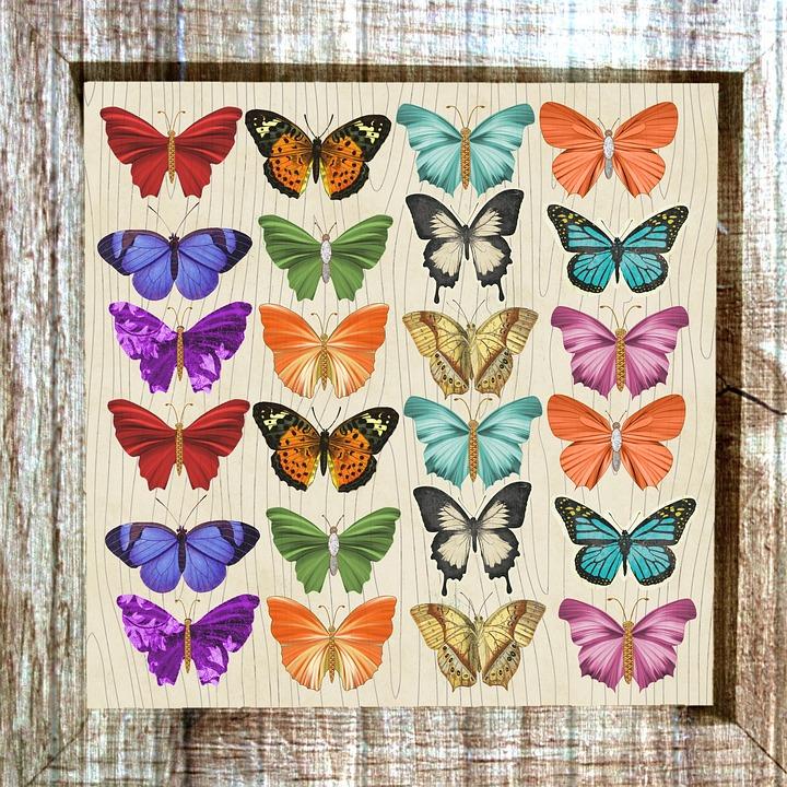 Mariposa Enmarcado Colorido · Imagen gratis en Pixabay