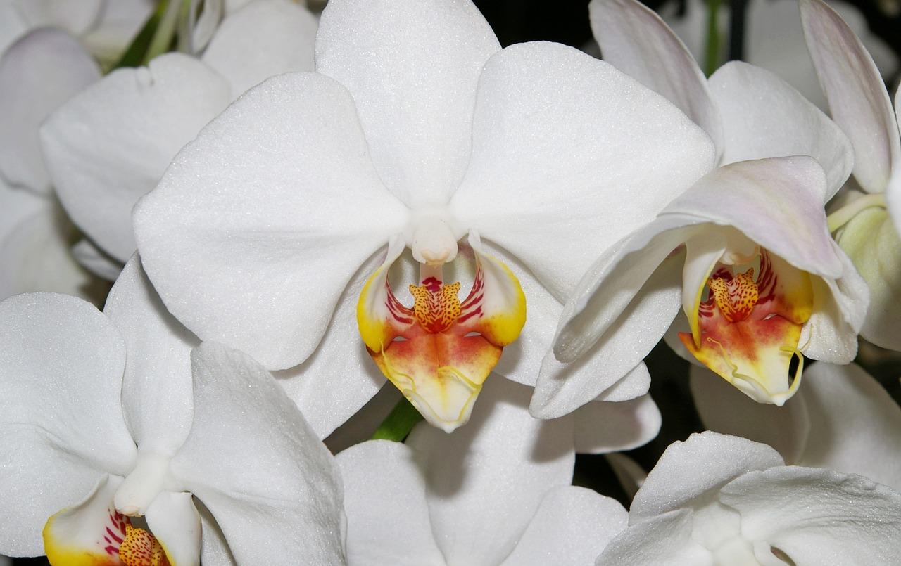 Фото цветов орхидей крупным планом