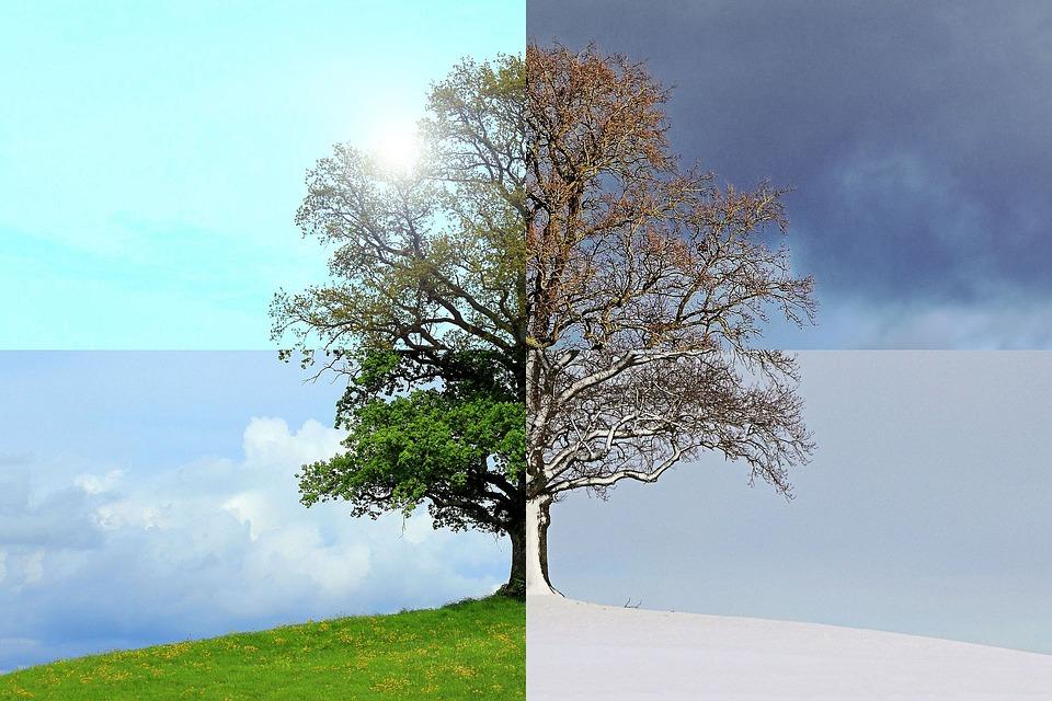 今年の季節, 夏, 秋, 冬, 春, ツリー