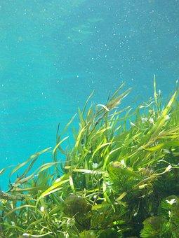 Algen, Unterwasser, Seetang, Grün