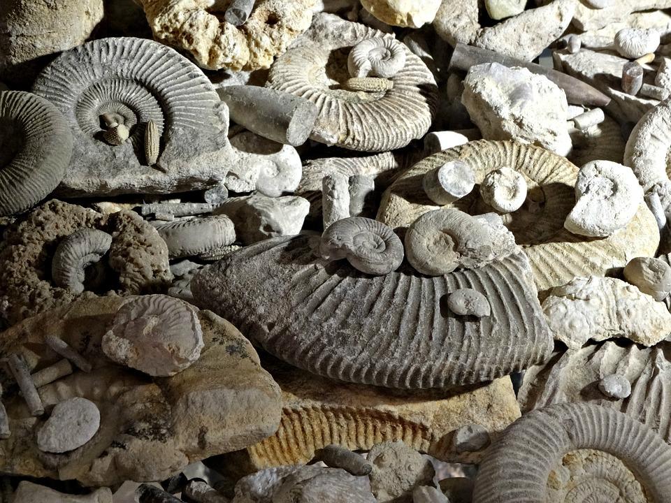 epub Το αρχαιολογικό έργο στη Μακεδονία