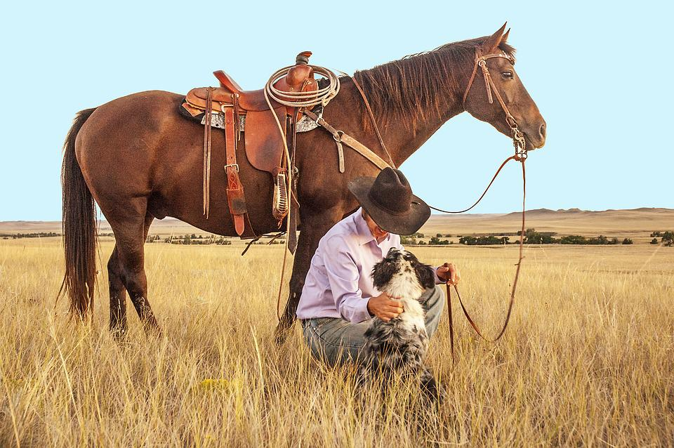 Cowboy, Horse, Dog, Pasture, Western, Ranch, Ranch Land