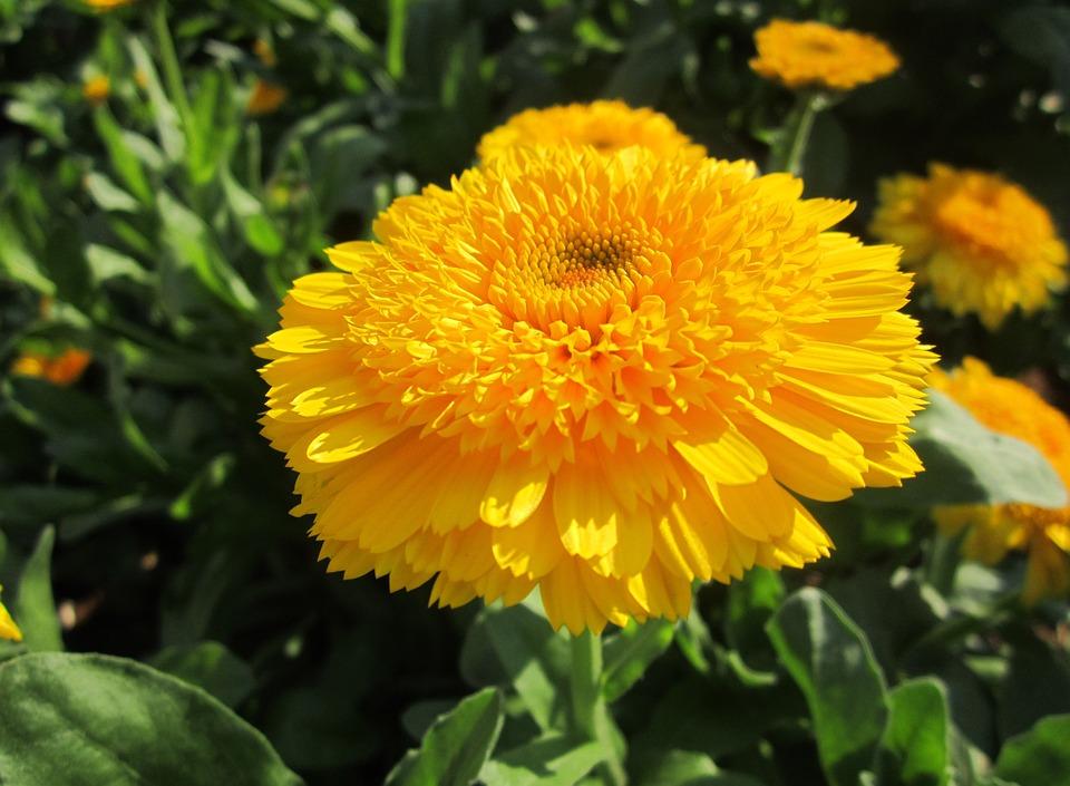 23 amazing flowers ndash - photo #42