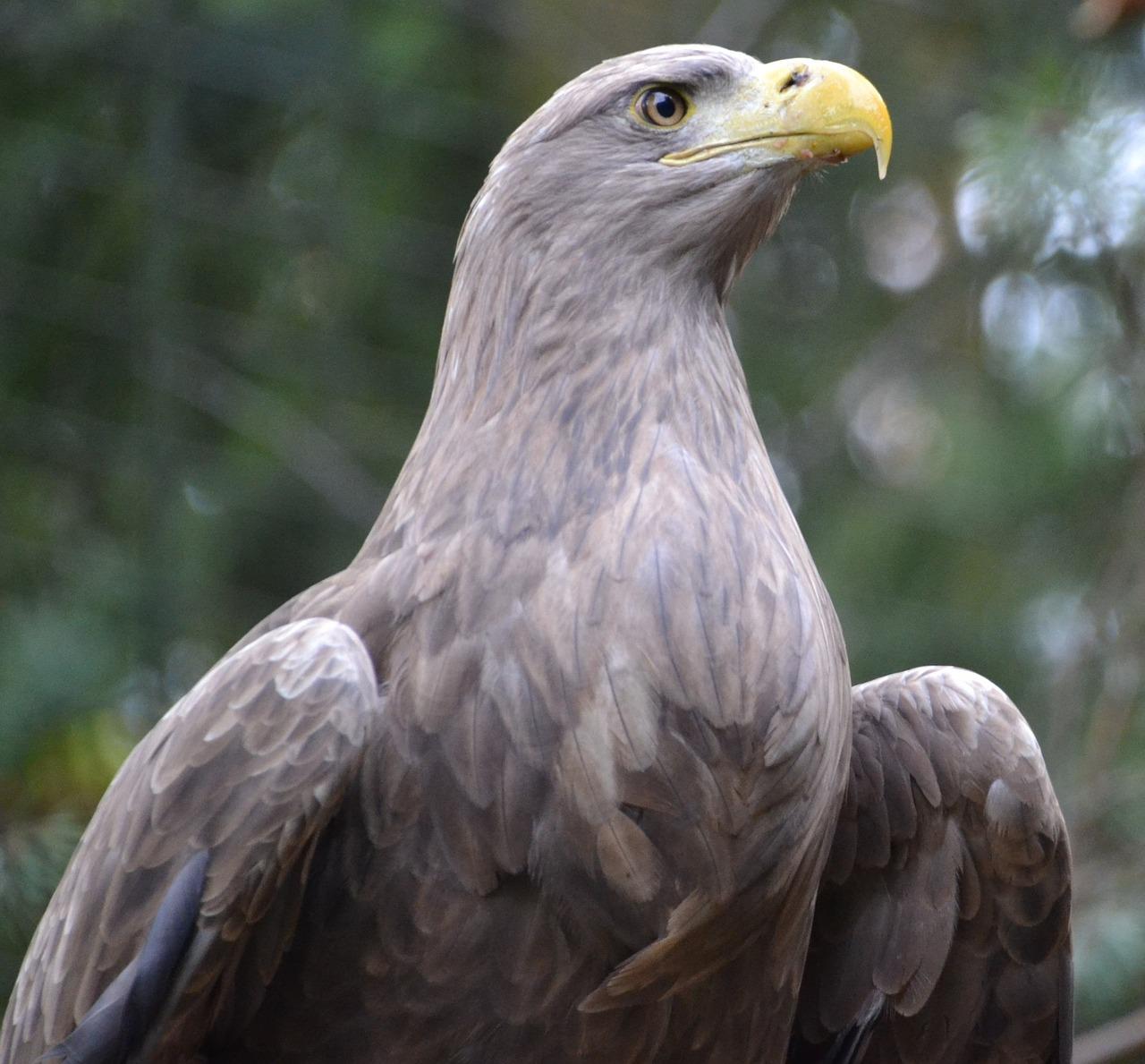 Орел в картинках птица, смешные именем леша