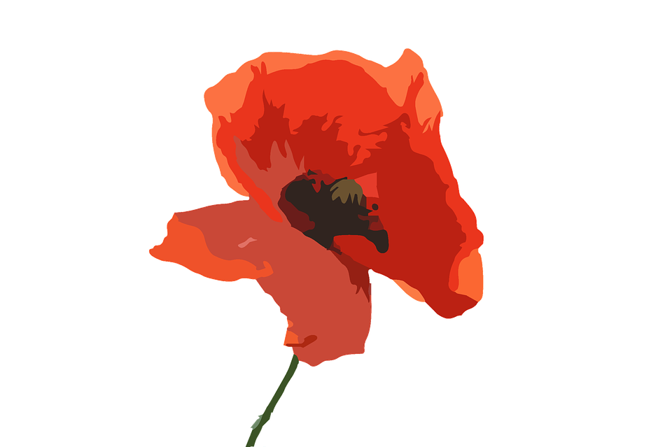 Poppy flower purple red free image on pixabay poppy flower flower purple red flower nature mightylinksfo