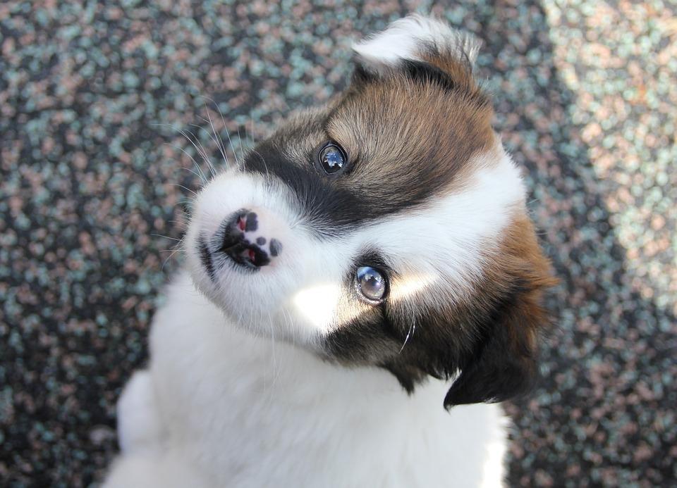 Chien chiot animal de compagnie photo gratuite sur pixabay - Animal mignon ...