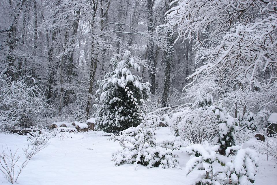 Cypress Christmas Tree