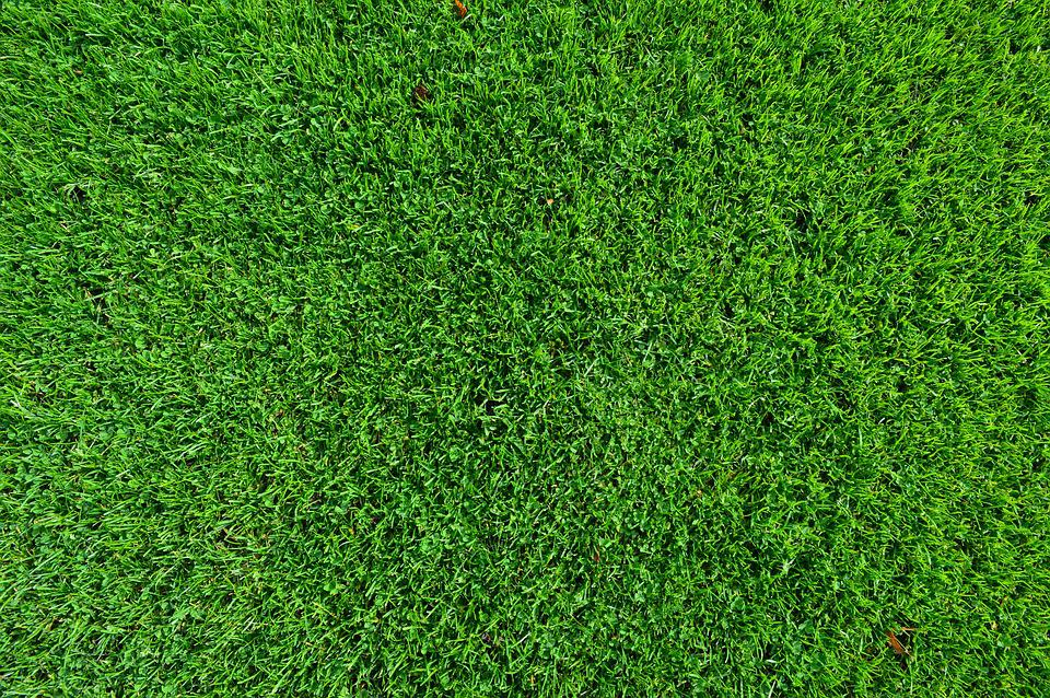Grass turf lawn free photo on pixabay for Grass carpet tiles