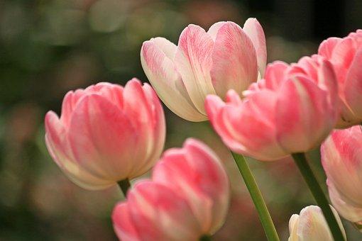 Fruhlingsblumen Bilder Pixabay Kostenlose Bilder Herunterladen