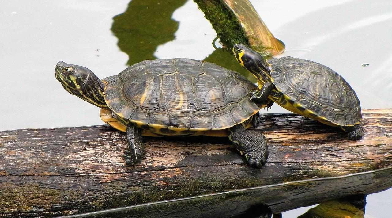 Черепахи картинки фото, днем