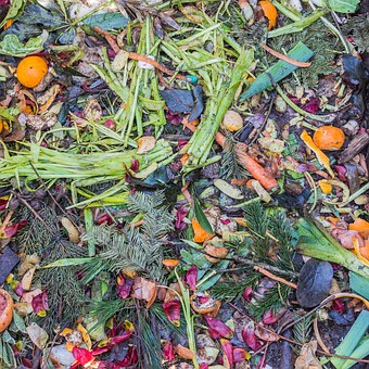 Compost Garbage Biological Waste Recipes W