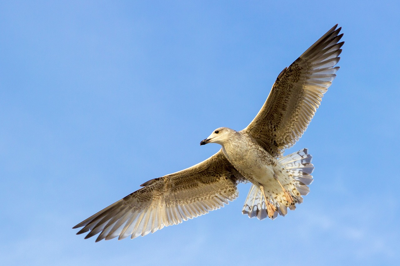 картинки летящих птиц