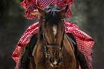 horse, horse show