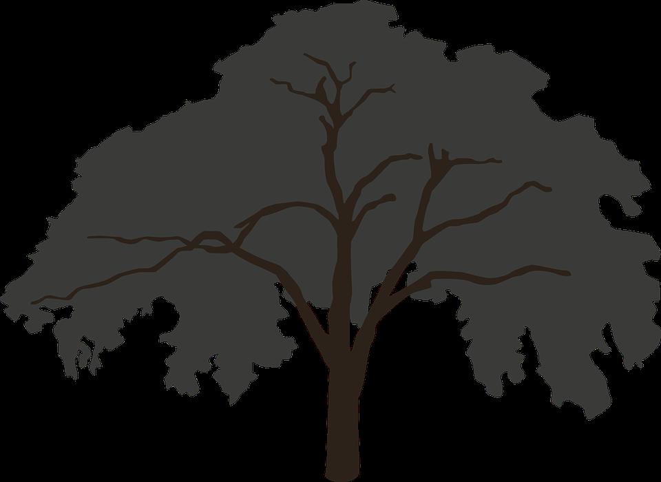 Kostenlose Illustration: Baum, Silhouette, Groß - Kostenloses Bild ...