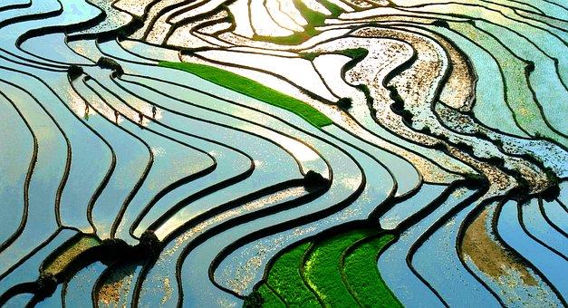 Lao Cai, Terraces, Green, Sunlight, Sapa