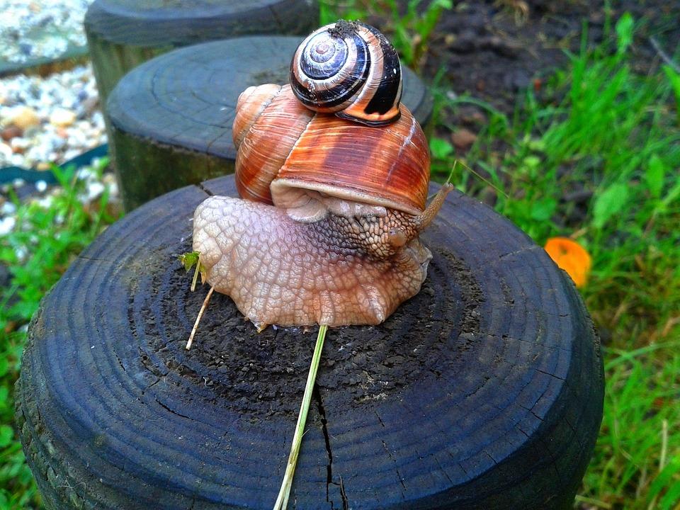 Caracol A Criação De Natureza - Foto gratuita no Pixabay