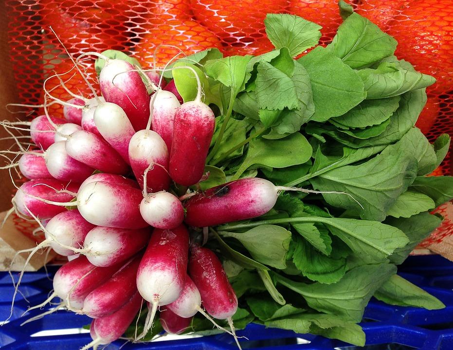 Radish, Vegetables, Vegetable Garden, Gardening