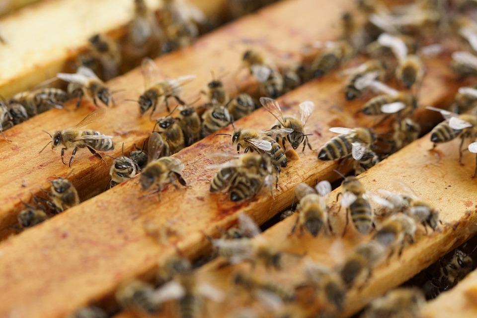 Bienenstock Bienen Insekten · Kostenloses Foto auf Pixabay