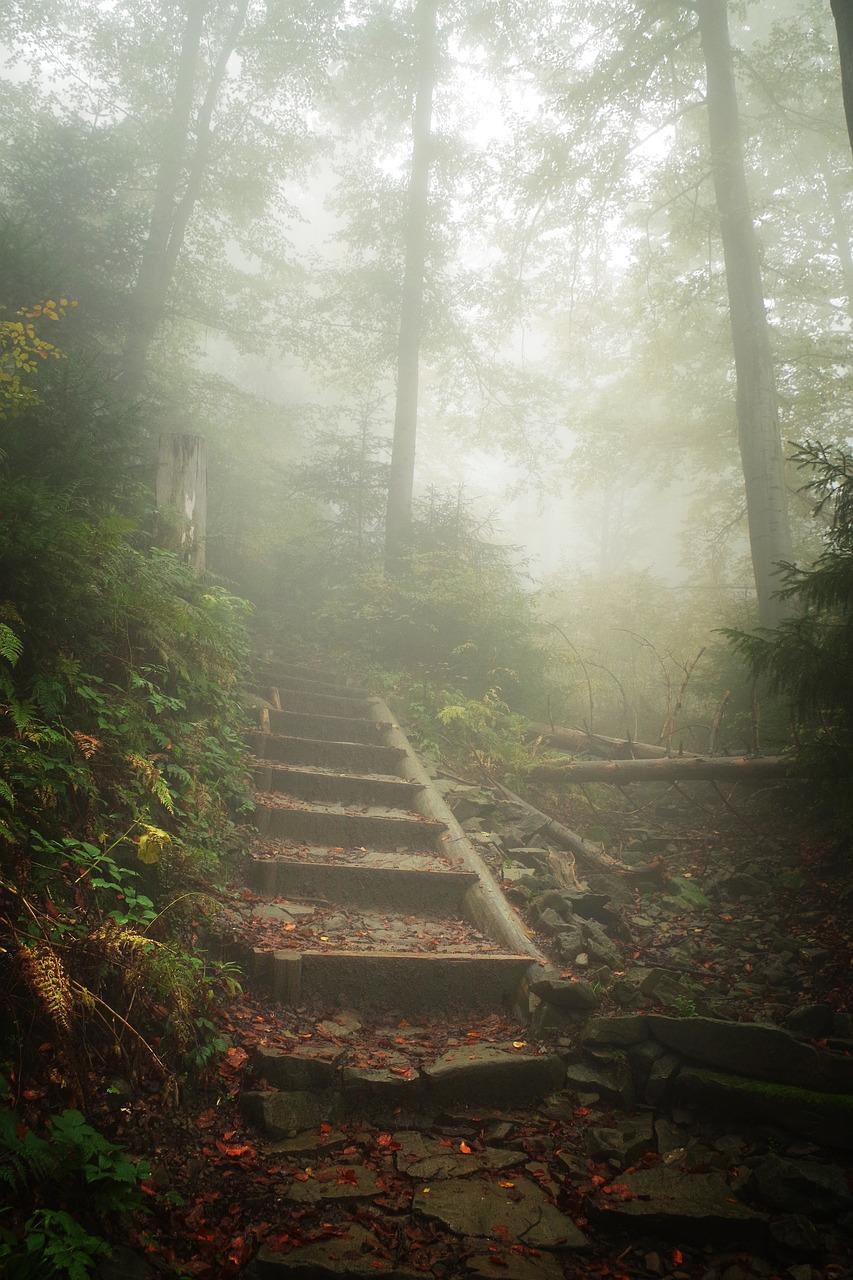 стоит вертикальное фото туманной тропинки чём