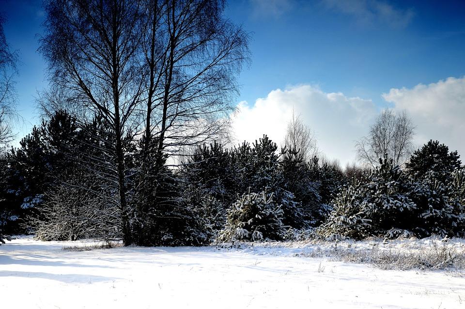 Foto gratis invierno nieve rbol jard n imagen for Ver imagenes de jardines de invierno