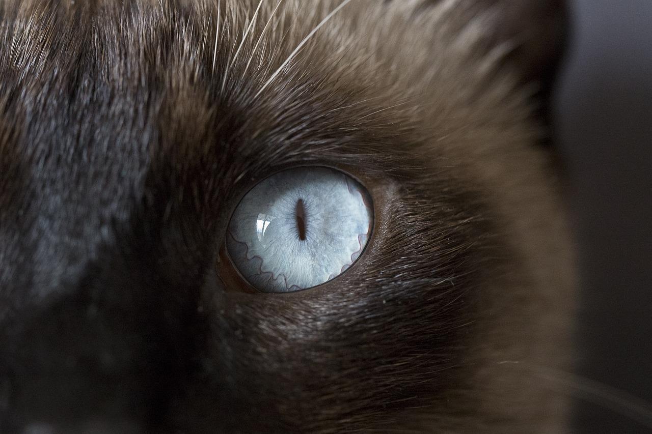 Cat rubbing eye