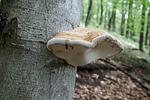 sponge, tree