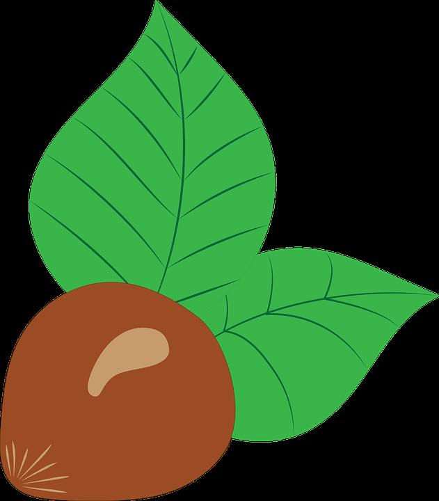 Liskovy Orech Vektor Kresleni Vektorova Grafika Zdarma Na Pixabay