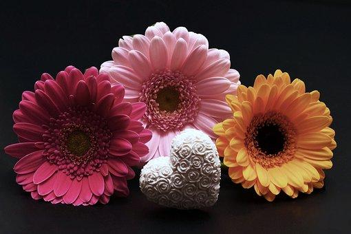 Gerbera, Flowers, Heart, Valentine'S Day