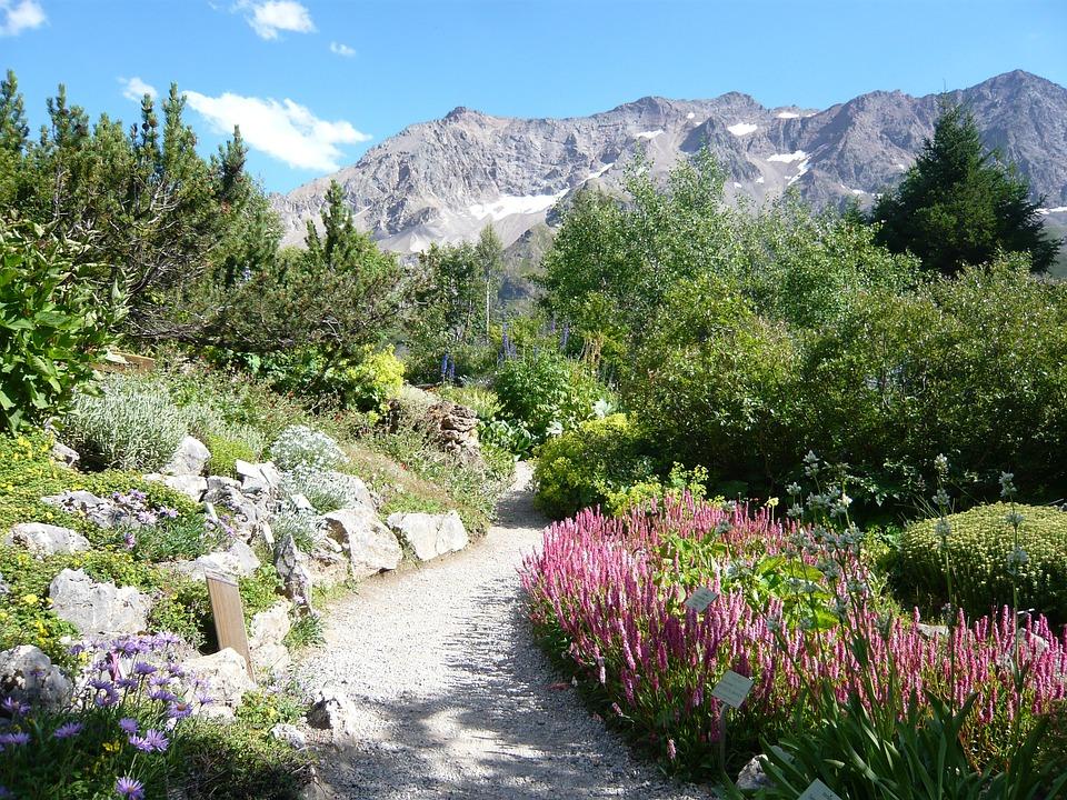 Photo gratuite hautes alpes jardin lautaret image for Boulevard du jardin botanique 20