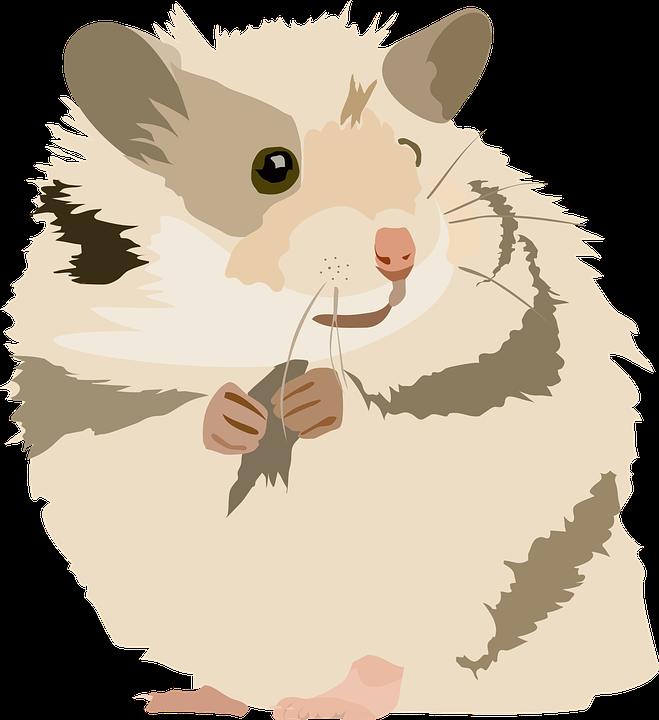 Pet Rat Drawing