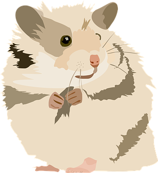 Hamster, Cute, Sweet, Animal, Pet