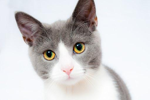 30,000+ Cat Pictures & Images [HD] - Pixabay