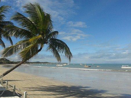 20+ Free Alagoas & Maceió Photos - Pixabay