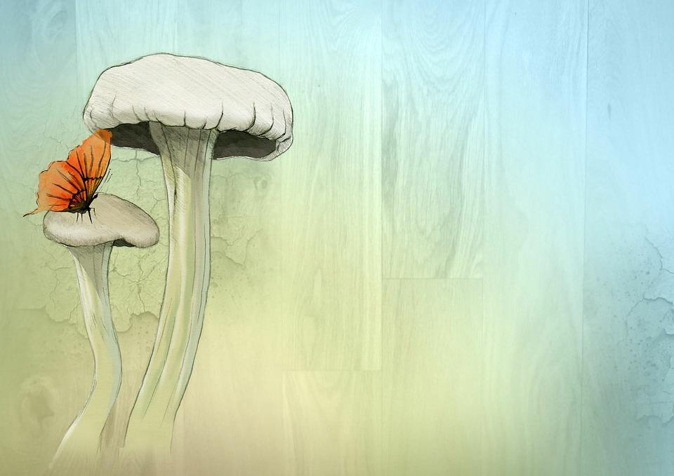 kostenlose illustration fee pilz aquarell