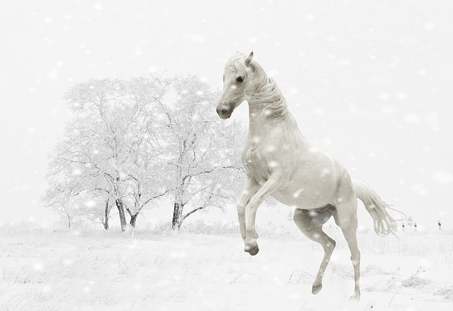 Gratis billede vinter hest skimmel spille sne gratis billede p pixabay 1152630 - Schneebilder kostenlos ...