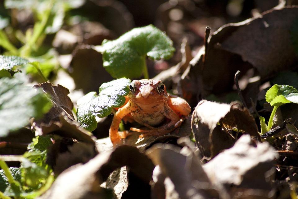 カエル 動物 オレンジ Pixabayの無料写真