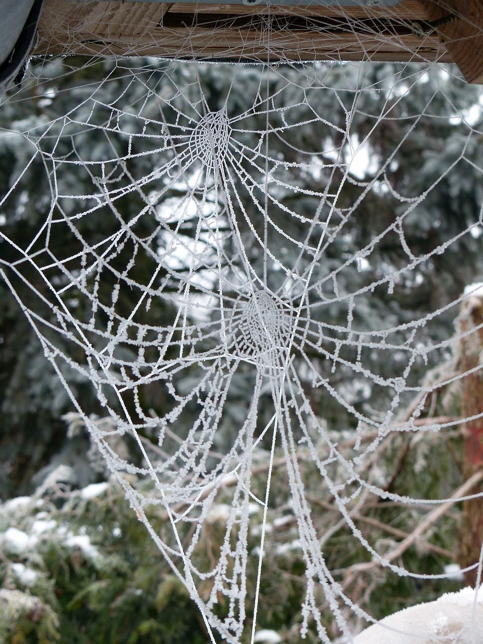 фото зимней паутинки любому представленных ниже