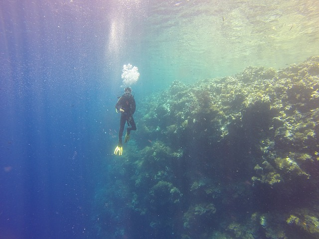 Diver Palau Drop Off 183 Free Photo On Pixabay