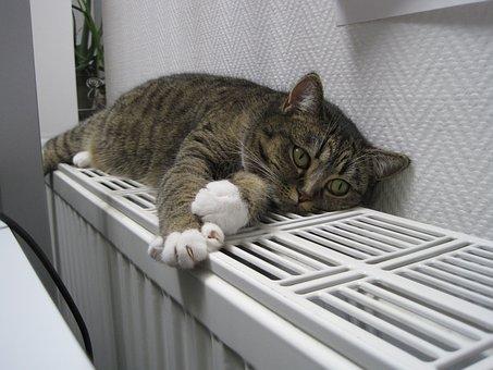 猫, 動物, ペット, 暖房, 睡眠
