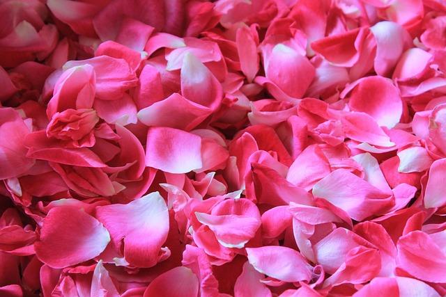 free photo rose petals flower potpourri free image on pixabay 1155147. Black Bedroom Furniture Sets. Home Design Ideas