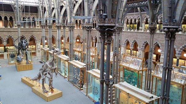 Oxford Museum Of Natural History, Oxford