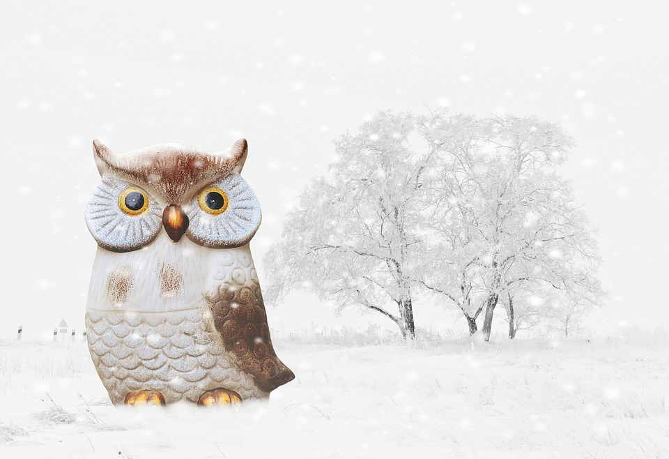 kostenloses foto eule winter schnee vogel lustig kostenloses bild auf pixabay 1158289. Black Bedroom Furniture Sets. Home Design Ideas