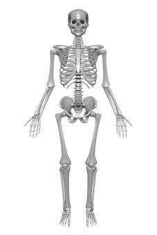 300 Human Skeleton Images Pictures In Hd Pixabay