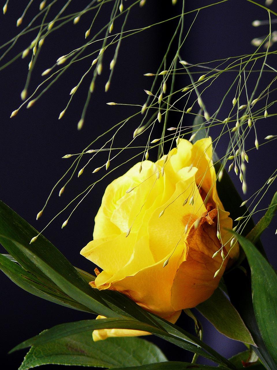 понятие, картинки как расцветают цветы образом будет доступна