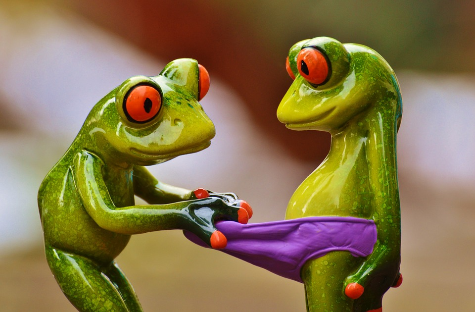 free photo frogs curious funny figures   free image on pixabay