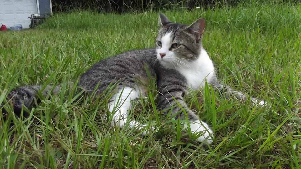 feral cat foundation