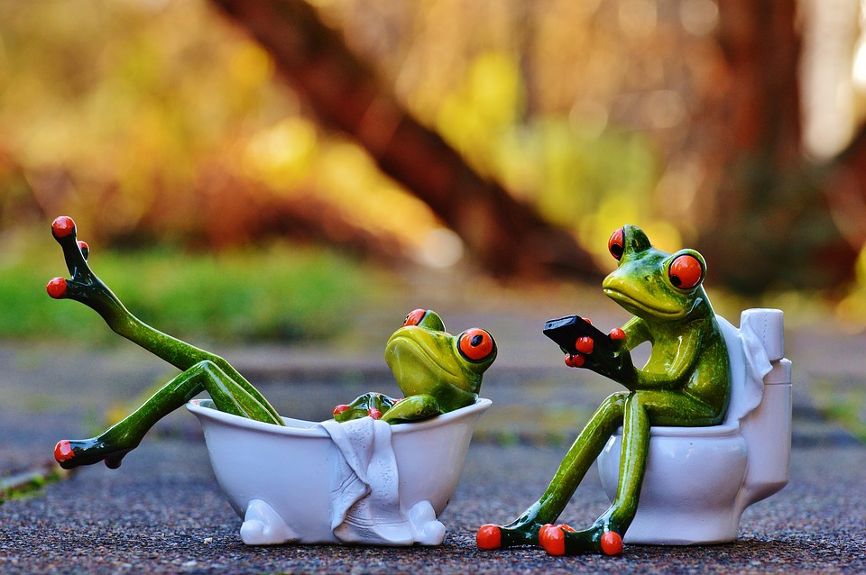 Free Photo Bath Loo Frogs Funny Bathroom Free Image