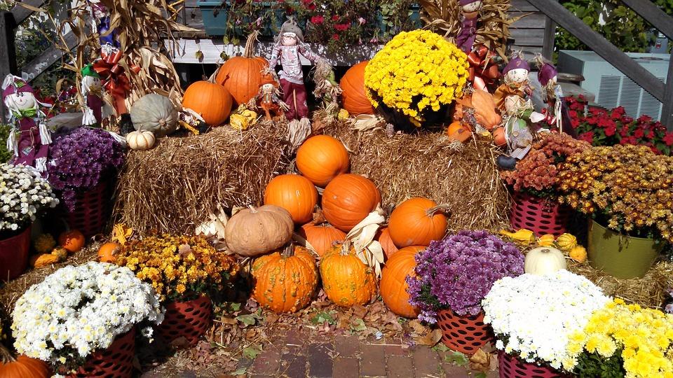 Herbst Ernte Lebensmittel Kostenloses Foto Auf Pixabay