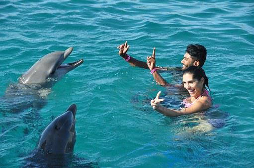 Dolphins, Fun, Swim, Water, Swimming